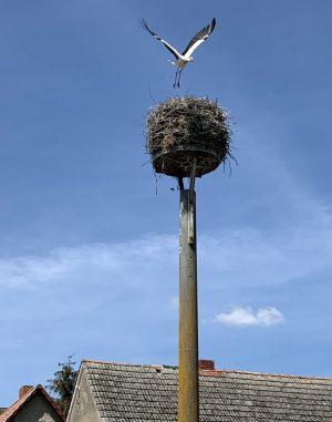 Das berühmte Storchennest in Platkow, jedes Jahr bewohnt