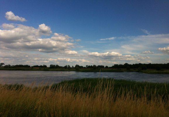 Blick vom Oderradweg auf die Oder im Küstriner Vorland